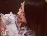 YAVRU KEDİ - Nöbet geçiren kedisine 20 bin lira harcadı