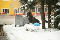 ORMANA - Kış Uykusundan Uyanan Ayı Ailesi Uludağ'da Böyle Görüntülendi