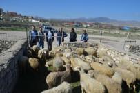 MEHMET REMZİ ARAYIT - Talihli Genç Çiftçilere Hibe Koyun Ve Koçları Teslim Edildi