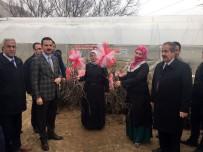ARİF KARAMAN - Adilcevaz'da Çiftçilere Aşılı Ceviz Fidanı Dağıtıldı