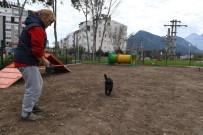 HAYVAN SEVERLER - Köpek Oyun Parkının Üçüncüsü Liman'a