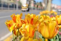 LALE SOĞANI - Diyarbakır Çiçek Bahçesine Dönüştü