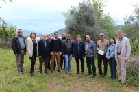 ÇUKURKÖY - DSİ'den Milas'a Yeni Yatırımlar