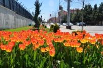 LALE SOĞANI - (Düzeltme) Diyarbakır Çiçek Bahçesine Dönüştü