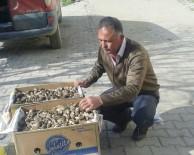 GÖKTEPE - Hisarcık'ta Kuzugöbeği Mantarı Köylülerin Gelir Kaynağı Oldu