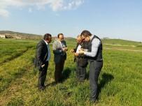 GÜBRE - Tarım Müdürlüğü Ekiplerinin Hububat Kontrolleri Başladı