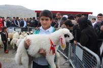 ÇEYREK ALTIN - Malatya'da En İyi Kuzu Yarışması