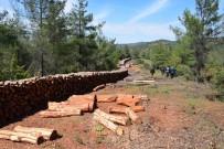ORMAN İŞLETME MÜDÜRÜ - Ormanlarında Bakım Çalışmaları Devam Ediyor