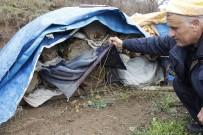 HÜSEYIN AVCı - Şemdinli'de Arı Ölümleri