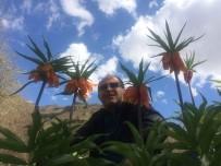 DOĞA FOTOĞRAFÇISI - Hakkari'de Ters Laleler Çiçek Açtı