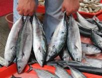 MARMARA BÖLGESI - Marmara'da balıkçılar palamutla güldü