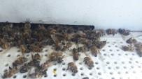 MUSTAFA AYDıN - Ortaca'da 200 Kovan Arı Telef Oldu