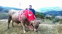 GÜREŞ - Pehlivan Boğalar Sezona Hazırlanıyor