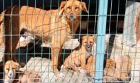 YAVRU KÖPEKLER - Barınağa Terk Edilen Hayvanlar