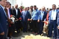 KATKI PAYI - Büyükşehir Belediyesi, Üreticilere 910 Damızlık Kıl Keçisi Tekesi Dağıttı
