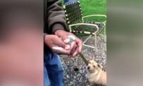 KALIFORNIYA - Kuşu Uçurmak İsterken Köpeğe Yem Ettiler