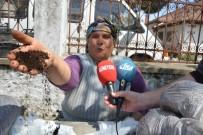 YUMURTA - Ekolojik Pazar Yerli Ve Yabancı Ev Hanımlarının Gelir Kapısı Oldu