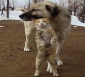 SOKAK KEDİSİ - Tunceli'de Kedi Ve Köpeğin Dostluğu