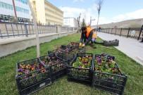 SONBAHAR - Bayburt Çiçek Açıyor