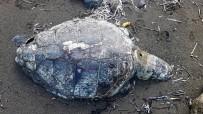 DENİZ KAPLUMBAĞALARI - Caretta Caretta Kıyıda Ölü Bulundu