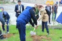 İÇMELER - Osmaneli Belediyesi İçmeler Tesislerine Bin Adet Toros Sediri Dikildi