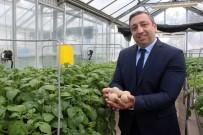 Pırlak Açıklaması 'Yerli Patates Tohumları Çiftçinin Maliyetini Aşağı Düşürecek'