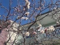 Van'da Meyve Ağaçları Çiçek Açtı