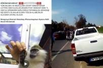 SARIYER - Yasadışı Maymun Satan Şahıs Böyle Yakalandı