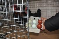 AÇIK ARTIRMA - Rengarenk Yumurtalara İlgi Büyük