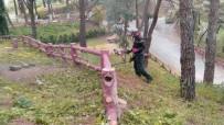 KALDIRIMLAR - Alaşehir'de İlaçlama Çalışmaları Devam Ediyor