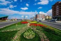 KAYAHAN - Büyükşehir Belediyesi 174 Bin Adet Lale Dikti