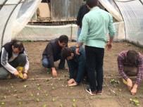 GÜBRE - Düzce Üniversitesi Öğrencilerinden Organik Tarım Üretimi