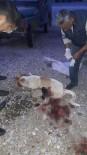 KÖPEK - Milas'ta Sokak Köpeğini Silahla Vurdular