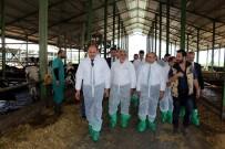 TARIM VE HAYVANCILIK BAKANLIĞI - Vali Demirtaş, Dev Hibe Alan Damızlık Düve Çiftliğini Ziyaret Etti