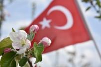 ORTADOĞU - Elma Ağaçları Çiçek Açtı