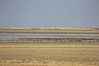 KUŞ CENNETİ - Su Oranı Arttı Kuşlar Seyfe Gölüne Aktı