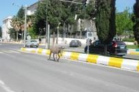 NECMETTIN CEVHERI - Trafikteki Eşek Sürücülere Zor Anlar Yaşattı