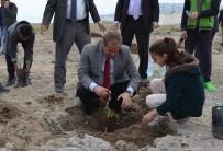 ARİF KARAMAN - Adilcevaz'da 150 Aşılı Ceviz Fidanı Toprakla Buluştu