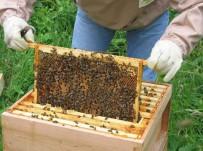 MUSTAFA ERDOĞAN - Arıcılık Kursu 4. Kez Açıldı