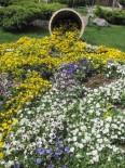 HAVA SICAKLIĞI - Erken Baharla Birlikte Açan Çiçekler Rengarenk Görüntülere Neden Oluyor