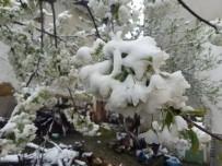Çiçek Üzerine Kar