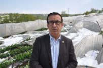 YAĞAN - Seralar Çöktü, Çilek Üreticisi Perişan Oldu