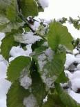 KAR KALINLIĞI - Yığılca'da 23 Nisan Kutlamalarına Kar Engeli
