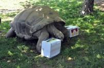 FARUK YALÇIN HAYVANAT BAHÇESİ - 97 Yaşındaki Kaplumbağanın Derbi Tahmini Tuttu