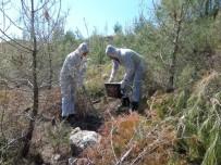 YUMURTA - Antalya'da Çam Kese Böceği Tedbirleri