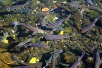 Bu Balıklar Çanakkale Gazisi