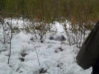 Kayıp Yaşlı Adaman Cesedi Ormanlık Alanda Bulundu
