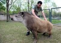 BURSA BÜYÜKŞEHİR BELEDİYESİ - Masaj Salonu Değil Hayvanat Bahçesi