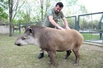 GÜNEY AMERIKA - Masaj Salonu Değil Hayvanat Bahçesi