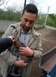 KÖPEK - Pitbull Kediye Saldırdı